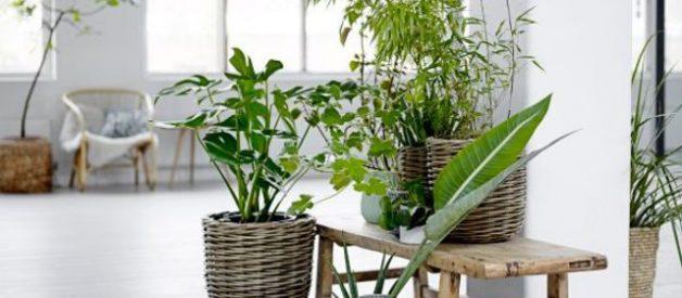 déco nature plante